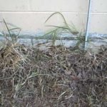 Orange Park Florida home inspector discovers bulging wall with wires